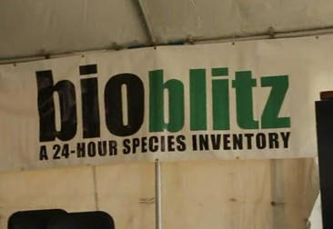 BioBlitz-Mobile-Learning-366x251